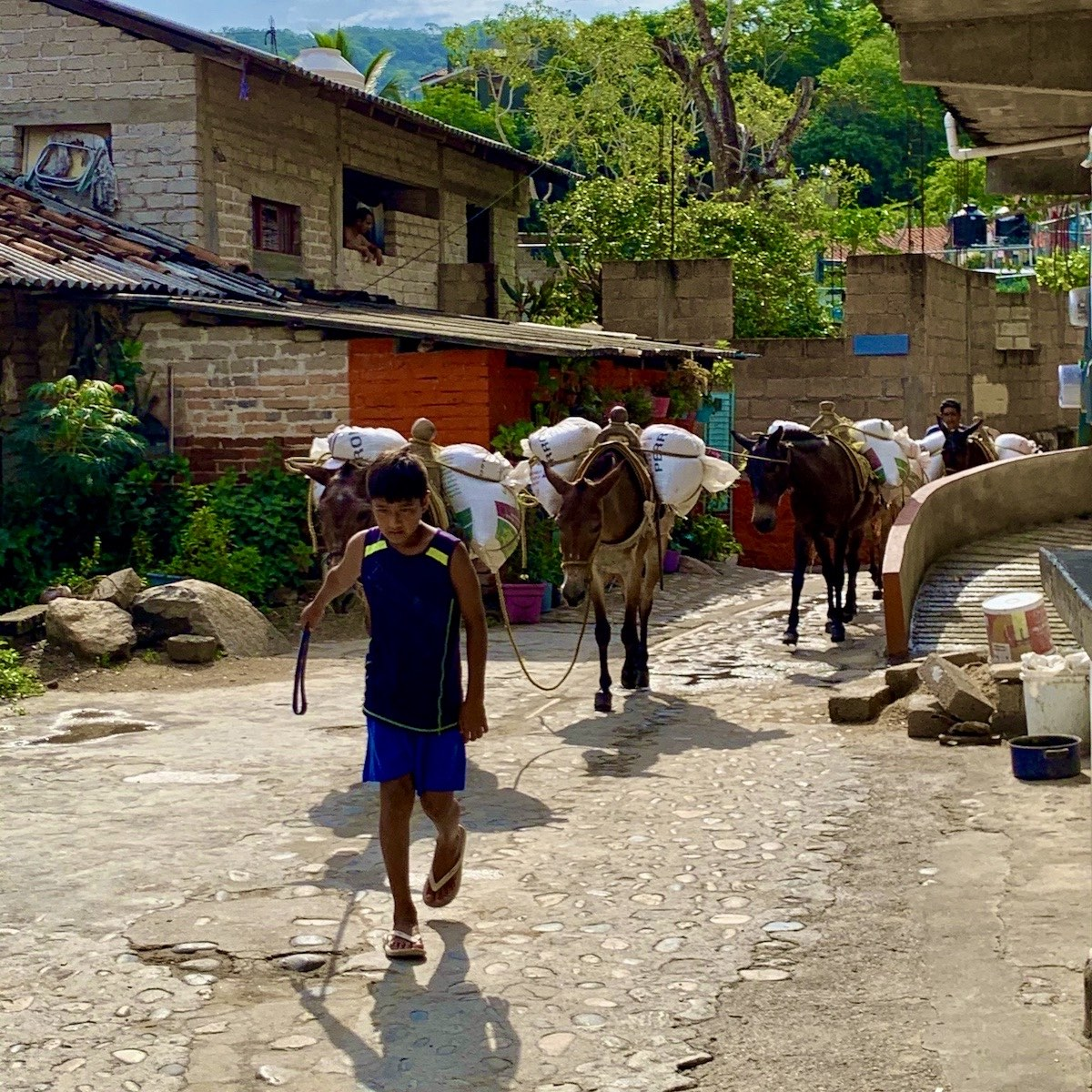 Yelapa des ânes