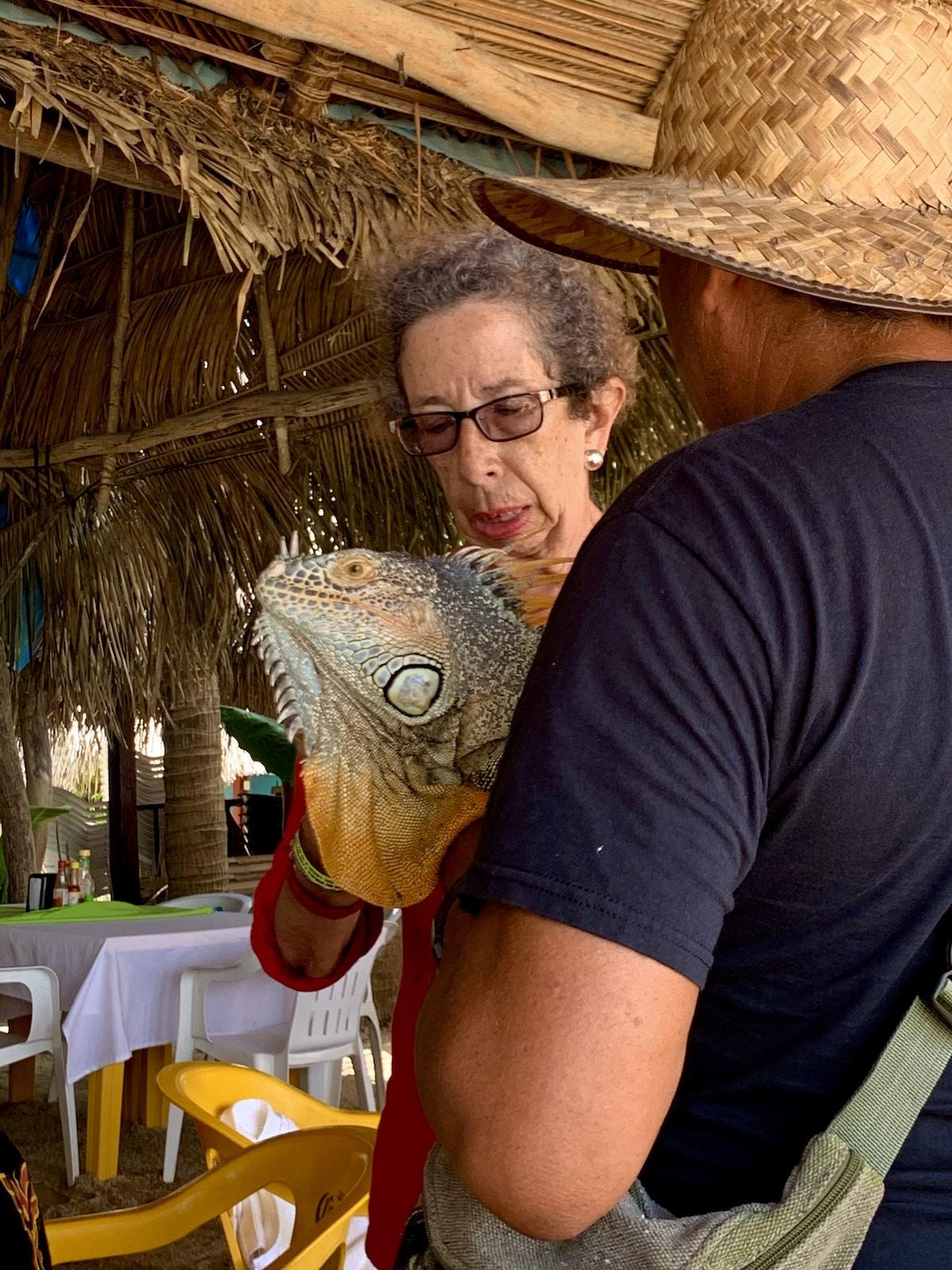 Chercher l'iguane