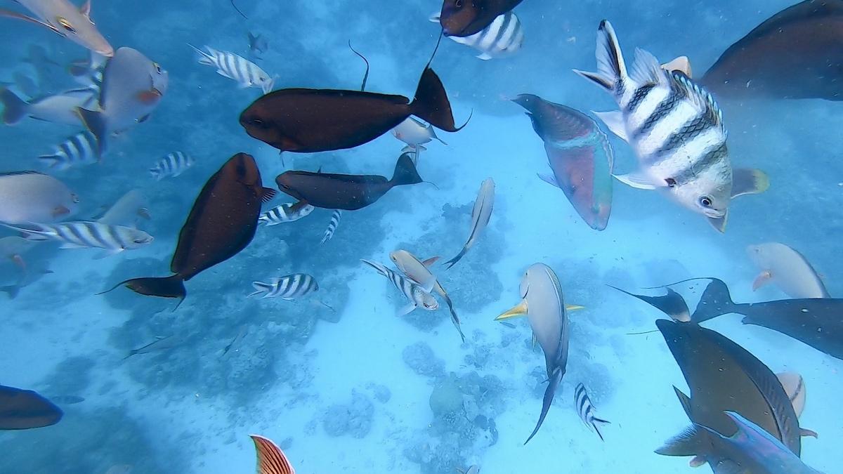 Rangiroa l'aquarium